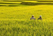 Photo of Pembangunan Pertanian Berkelanjutan